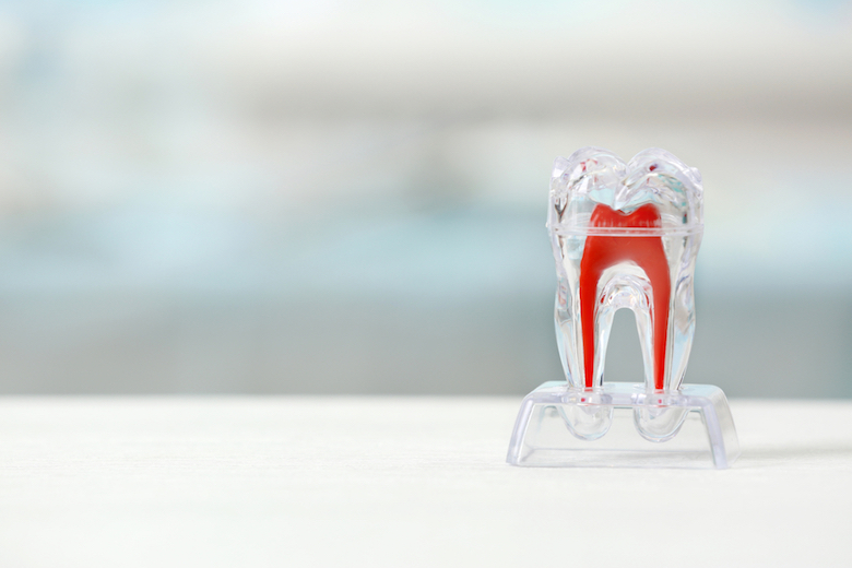 Researchers discover method to control tooth root development